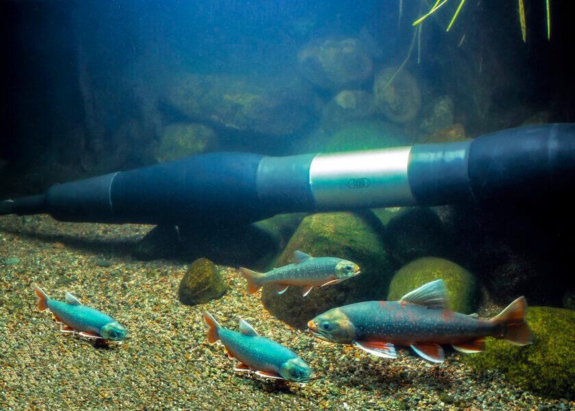 Seaflex_fiskar-acenterbottom.jpg